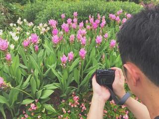 photographer taking photo of Siam tulip