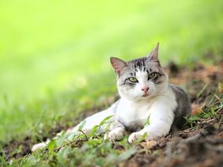 緑の丘の猫