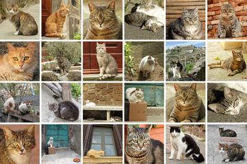 italian street cats collage