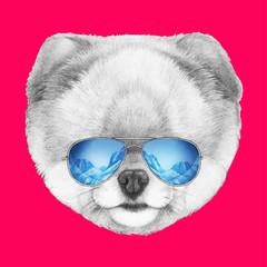 Portrait of Pomeranian with mirror sunglasses. Hand drawn illustration.