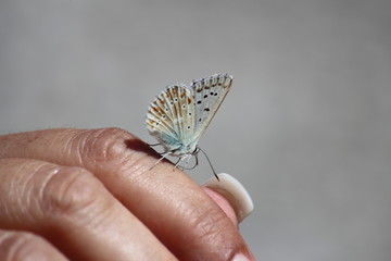 Fotoväggar - Schmetterling auf der Hand