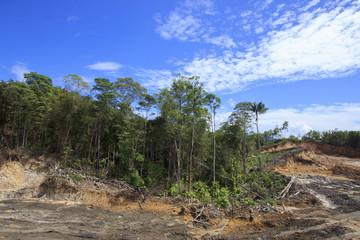 Deforestation environmental destruction logging climate change