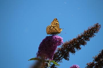 Fotoväggar - Schmetterling im Sommer