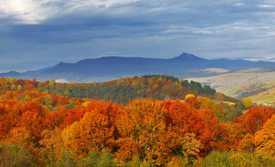 autumn color forest and mountains in the background