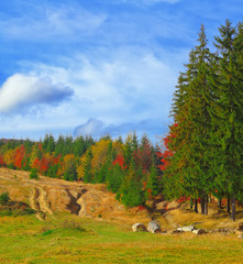 colored autumn woods and sunny meadow