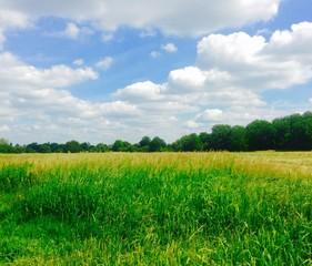 A vibrint grassland
