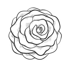 beautiful monochrome black and white rose isolated on white background