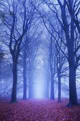 Path in a dark and foggy forest in The Netherlands