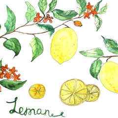 Watercolor vector background fresh lemon branches with flowers
