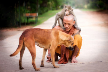 Buddhist monk have compassion for Dog and Monkey.