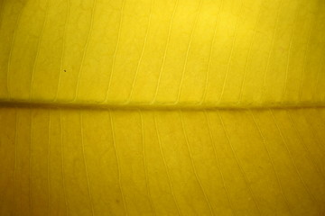 Leaves backlit images background