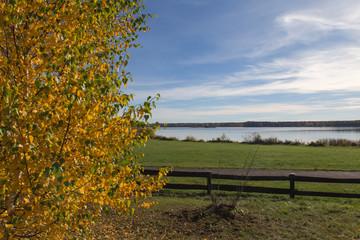 Golden Autumn tree Latvia