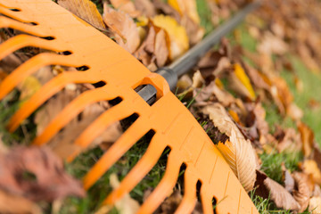 Close up of a rake and leaves