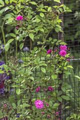 Decorative rose vertical