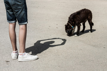 The shadow of a boy takes a picture of a dog.
