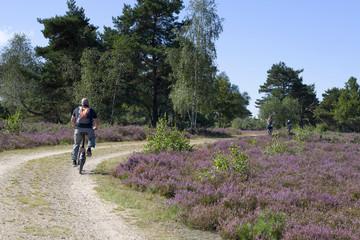 Fahrradfahrer in der Heide