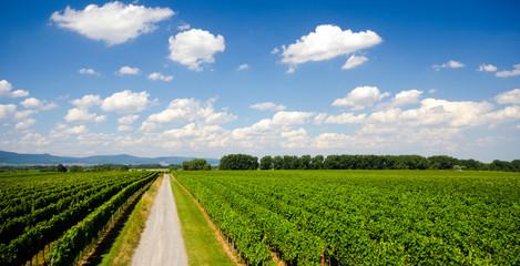 Weg durch Weinberg in der Pfalz :)