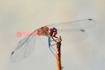 Dragonfly and nature/ Dragonfly and natural background