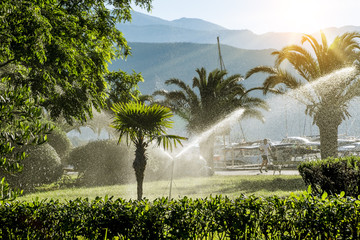 lawn irrigation system for watering the vegetation  at dawn