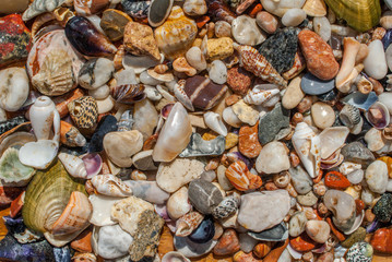 assorted seashells and pebbles texture background
