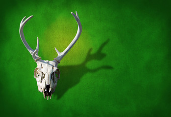 Deer skull on a earth green background