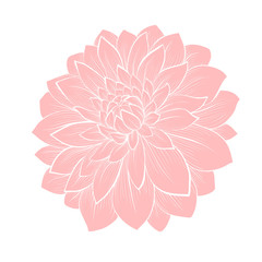 beautiful dahlia flower isolated on white