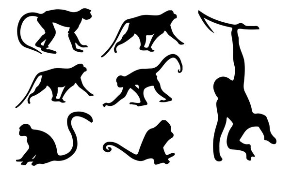 Monkey Silhouette, set vector Animals Icons