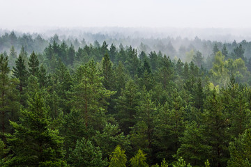 Papiers peints Forets Fog over the forest