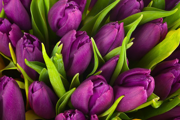 Fototapeta Nature bouquet from purple tulips for use as background. obraz