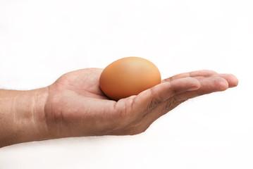 hand holding egg isolated on white background