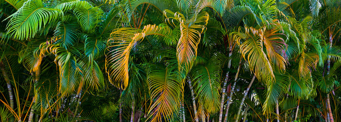 Panorama of colorful palm tree leaves