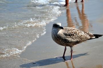 Eine junge Möwe am Strand