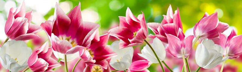 image of many beautiful flowers