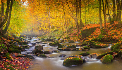 Landscape magic river in autumn forest at sunlight.