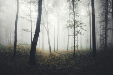 foggy forest with soft light
