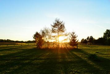 Baumgruppe vor Sonnenuntergang