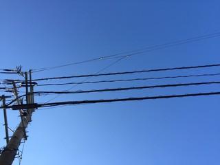 雲のない青空と電線