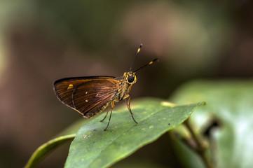 Butterfly, Tortuguero, Costa Rica