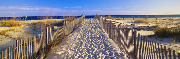 Wall Murals Beige Pathway and sea oats on beach at Santa Rosa Island near Pensacola, Florida