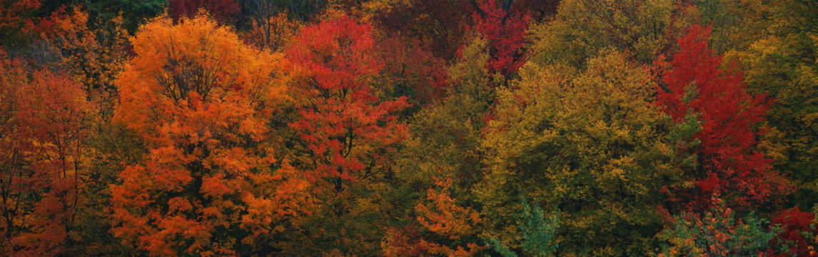 These shows the autumn colors on the foliage of the trees.