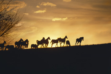 These are horses running in the distance at sunset.