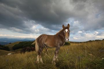 Ritratto di un giovane cavallo marrone con la stella bianca in fronte