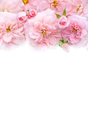 Pink roses bouquet on the white background