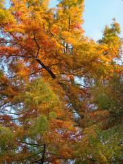 Arbre en automne