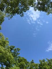 木に囲まれた青空