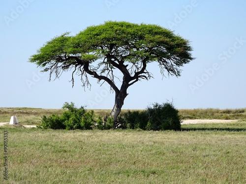 baum in afrikanischer savanne stockfotos und lizenzfreie bilder auf bild 90055333. Black Bedroom Furniture Sets. Home Design Ideas
