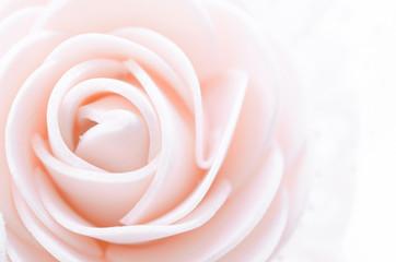 center pink rose macro.