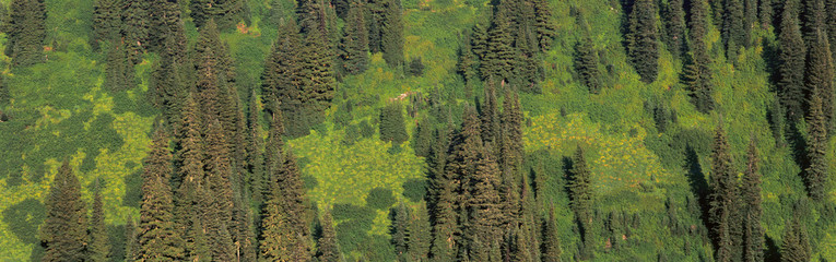 Aerial view of forest on mountainside