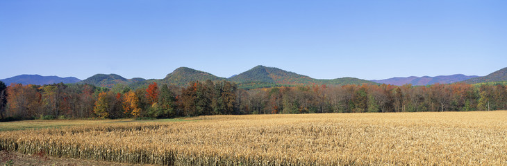 Field and mountains, New York