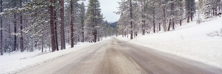 Icy road and snowy forest, California